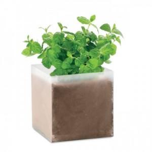 Caja con semillas de menta para plantar - regalos ecológicos